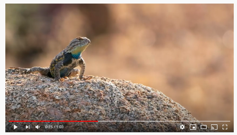 Sixty seconds in the Sonoran Desert #7